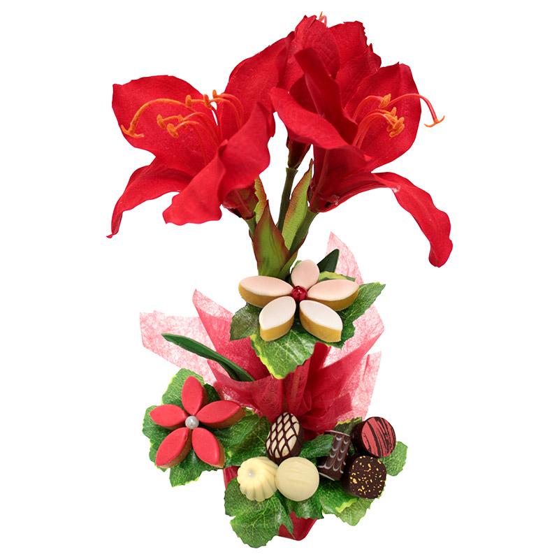 Amaryllis gourmand coffret cadeau interflora for Amaryllis fleuriste