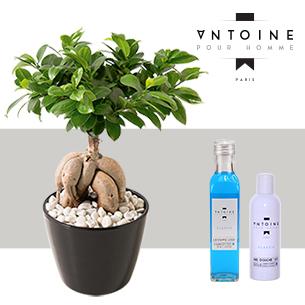 Ficus Ginseng et son Pack Antoine pour Homme - interflora