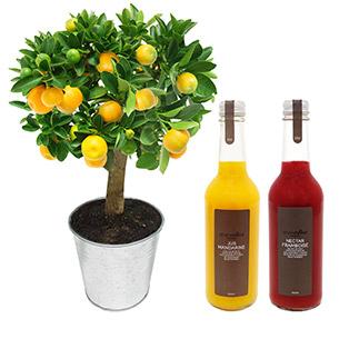 Fleurs et cadeaux L'agrume et ses jus Alain Milliat  Fleur jaune
