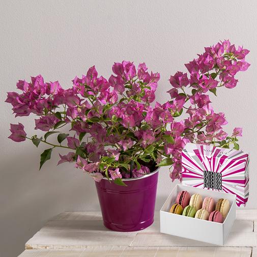 Fleurs et cadeaux Bougainvillier et ses macarons FAUCHON