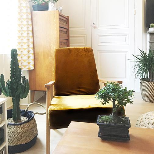 Plantes vertes et fleuries Bonsaï
