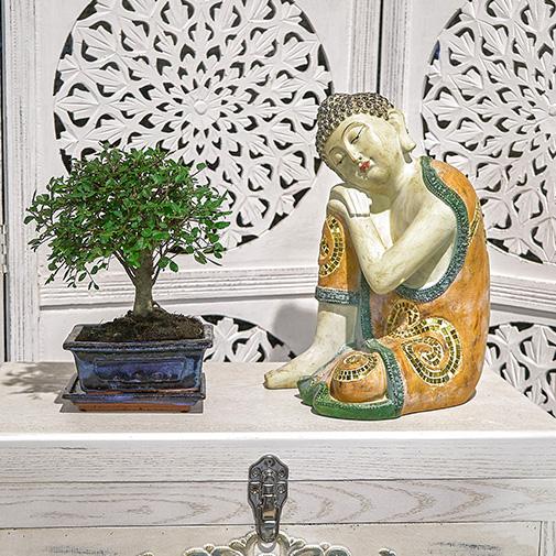 Plantes vertes et fleuries Bonsai