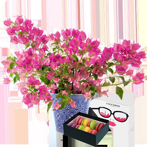 Plantes vertes et fleuries Bougainvillier et ses macarons FAUCHON
