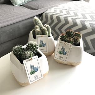 Cactus - interflora