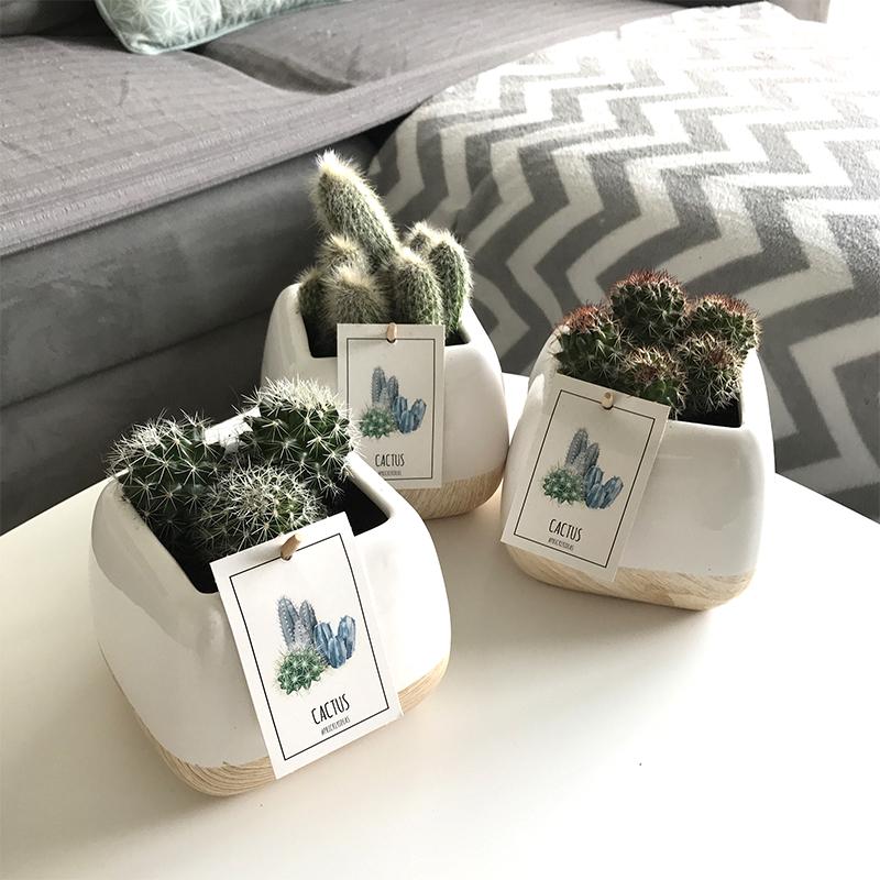 cactus collection homme livraison par chronopost l 39 atelier interflora interflora. Black Bedroom Furniture Sets. Home Design Ideas