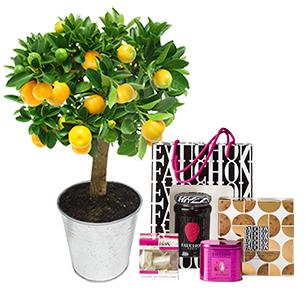 Fleurs et cadeaux Calamondin et son coffret shopping chic FAUCHON Collection Homme Gourmand