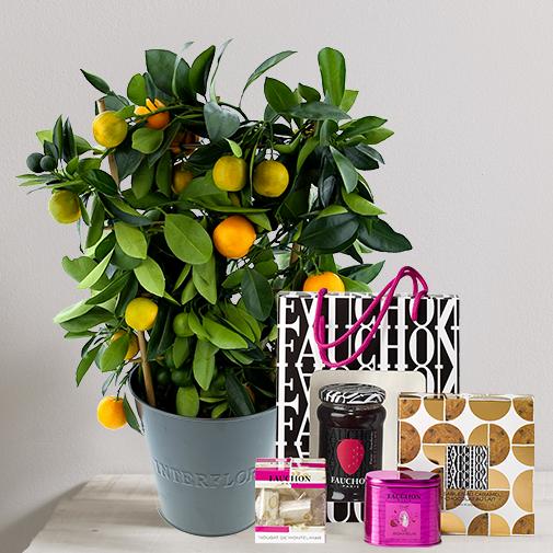 Fleurs et cadeaux Calamondin et son coffret apéritif chic FAUCHON