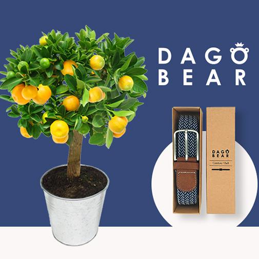 Fleurs et cadeaux Calamondin et sa ceinture DAGOBEAR