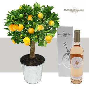 Calamondin et son rose Mathilde Chapoutier - interflora
