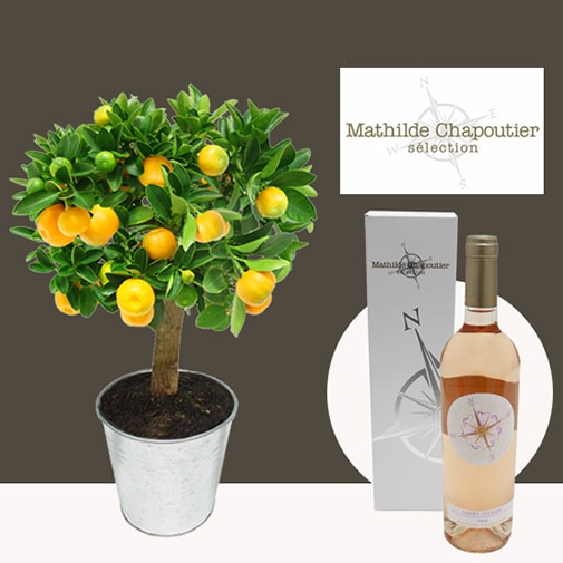 Fleurs et cadeaux Calamondin et son rosé Mathilde Chapoutier