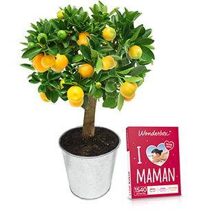 Calamondin et son coffret Wonderbox <br>I Love Maman - interflora