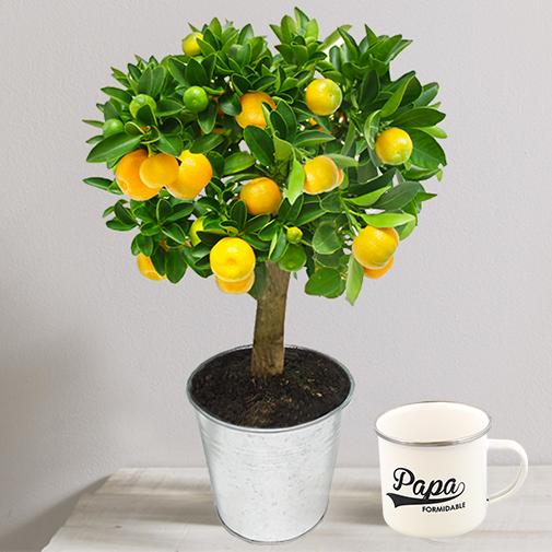 """Fleurs et cadeaux Calamondin & son mug """"Papa formidable"""""""