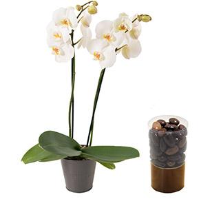 Orchidee et ses amandines - interflora