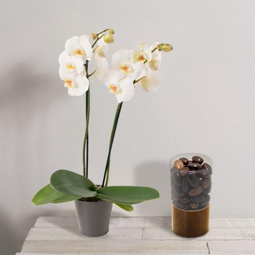 Fleurs et cadeaux Orchidée et ses amandines