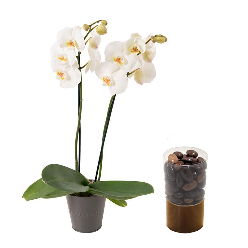Coffret cadeau orchid e et chocolat interflora for Fleuriste livreur