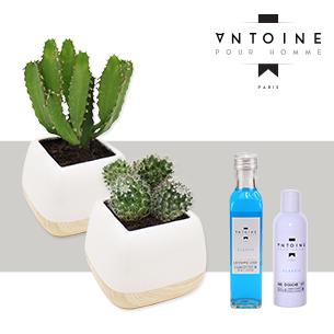 Cactus et son Pack Antoine pour Homme - interflora