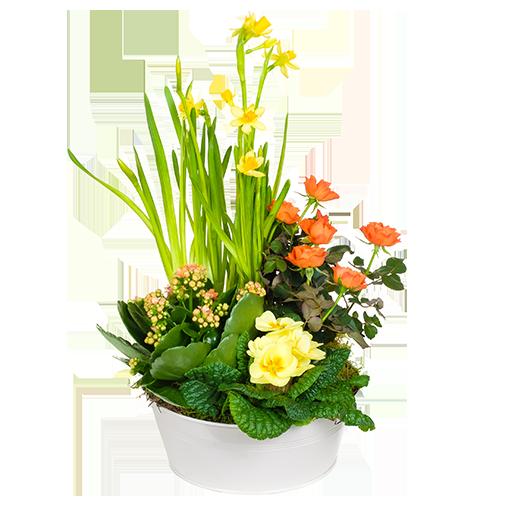 Bouquet de fleurs Coupe de plantes avec jonquilles