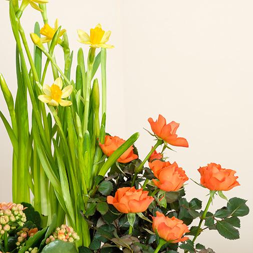 Bouquet de fleurs Coupe de plantes avec jonquilles et ses chocolats