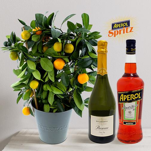 Fleurs et cadeaux Calamondin et son spritz