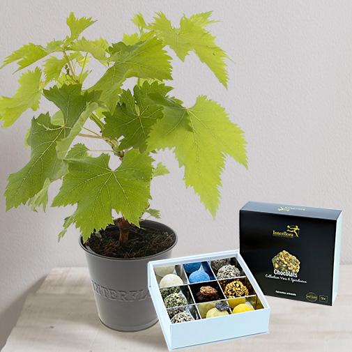 """Bouquet de fleurs Pied de vigne et ses chocolats """"Vins et Spiritueux"""""""