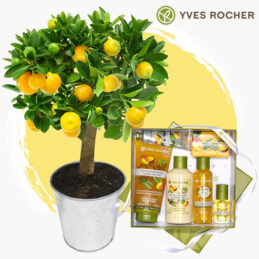 Fleurs et cadeaux Calamondin & box Yves Rocher