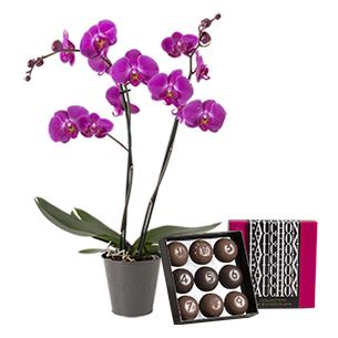 Orchidee et son ecrin FAUCHON - interflora