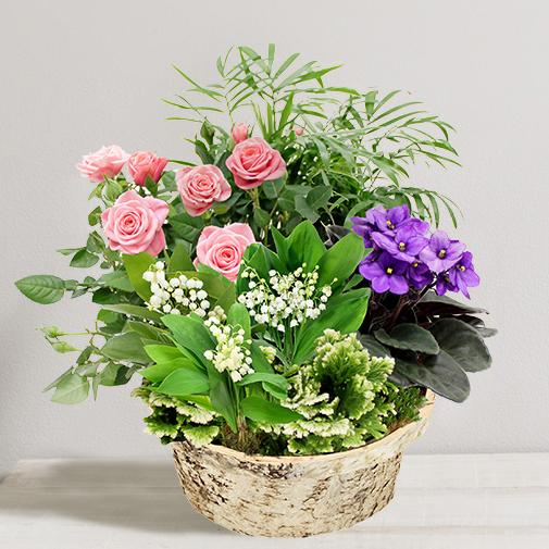 muguet plantes vertes et fleuries de saison 1er mai coffret cadeau livraison chronopost. Black Bedroom Furniture Sets. Home Design Ideas
