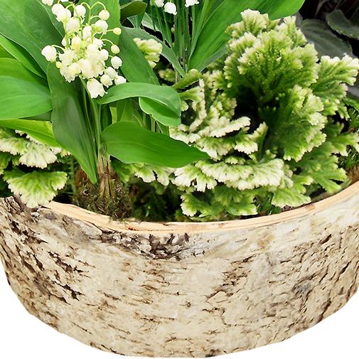 Muguet plantes vertes et fleuries de saison 1er mai for Fleuriste livreur