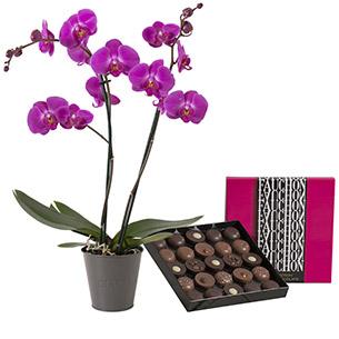 Orchidee et sa boite geante FAUCHON - interflora