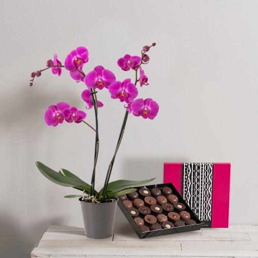 Fleurs et cadeaux Orchidée et son écrin géant FAUCHON