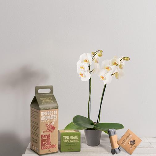 Fleurs et cadeaux Orchidée et son pack potager d'herbes & aromates