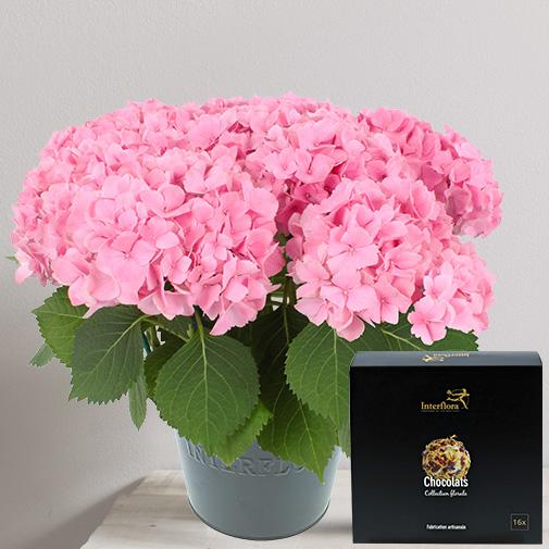 Fleurs et cadeaux Hortensia et ses chocolats Collection Florale