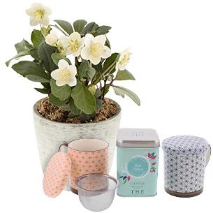 Hellebore en pot et son the zen detox Le Comptoir francais + 2 tasses - interflora