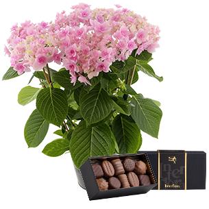 Hortensia & ses chocolats - interflora