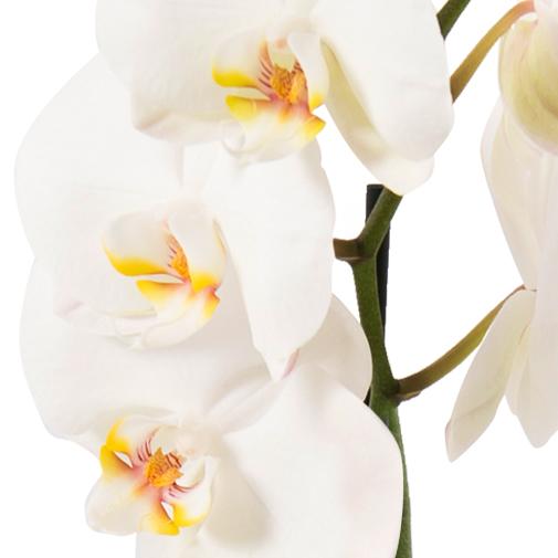 Fleurs et cadeaux Petite princesse Kaloo