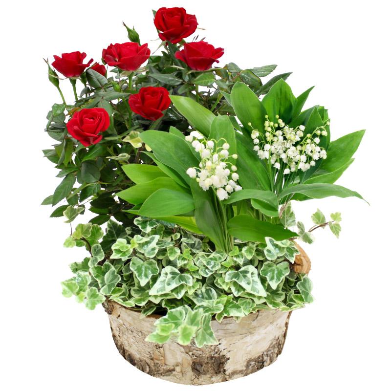 jardin de muguet collection 1er mai livraison chronopost domicile interflora. Black Bedroom Furniture Sets. Home Design Ideas