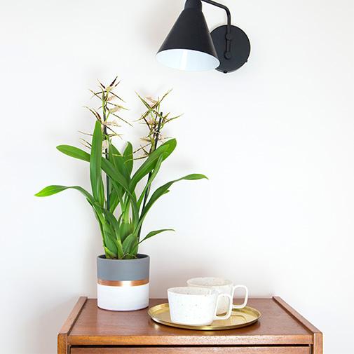 Plantes vertes et fleuries Cambria Melissa