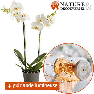 Orchidee et sa guirlande lumineuse Nature & Decouvertes - interflora