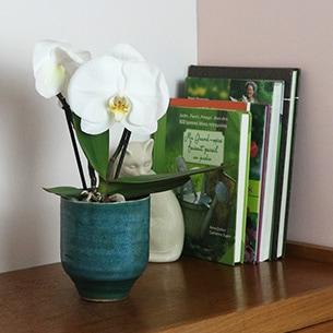 Plantes vertes et fleuries Phalaenopsis Singolo + cache pot Collection Remerciements