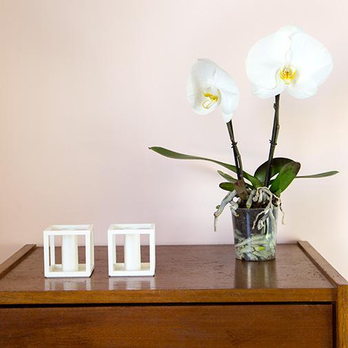Plantes vertes et fleuries Phalaenopsis Singolo + cache pot