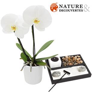 Orchidee Hanoi et son jardin zen Nature & Decouvertes - interflora