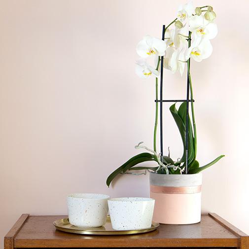 Plantes vertes et fleuries Phalaenopsis Nevada + cache pot