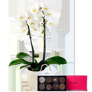 Bouquet de fleurs Phalaenopsis blanc et son écrin de de chocolats FAUCHON