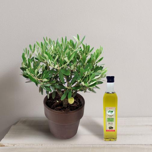 Fleurs et cadeaux Olivier et son huile d'olive