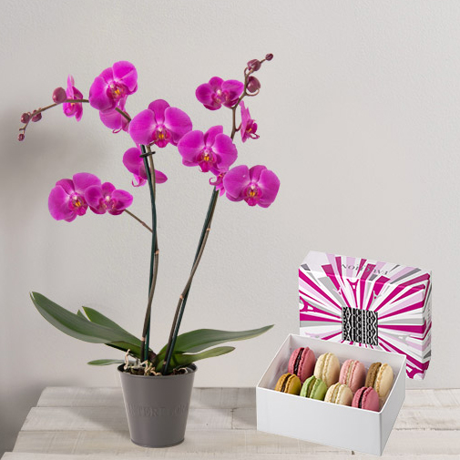 Fleurs et cadeaux Amour de macarons FAUCHON