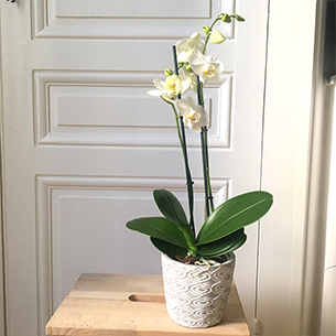 plantes et orchid es livraison de plantes vertes et fleuries interflora. Black Bedroom Furniture Sets. Home Design Ideas
