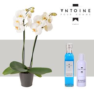 Orchidee et son Pack Antoine pour Homme - interflora