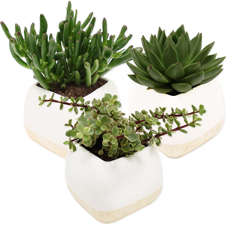 plantes grasses collection homme livraison par colis fleurs l 39 atelier interflora interflora. Black Bedroom Furniture Sets. Home Design Ideas
