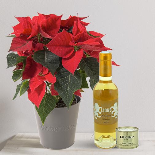 null Poinsettia gourmand