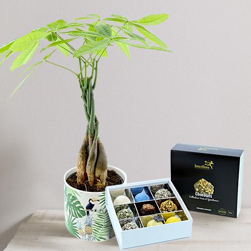 """Fleurs et cadeaux Pachira et ses chocolats """"Vins & Spiritueux"""""""